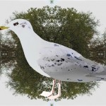 Dorthe Grum-Schwensen (DK) DOGR2